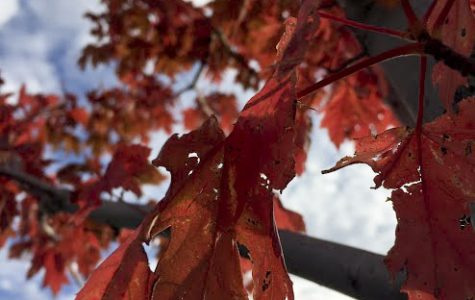 I CANT BE-LEAF MY EYES - the new bright and beautiful red, orange, and yellow leaves are dazzling locals around town